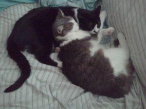 Miller cats
