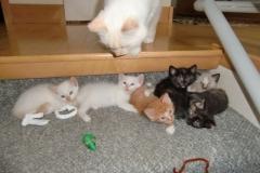 Bishop-kitties