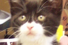 Fredin-kitty